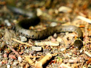 Slangen in NL vs. elders in de wereld